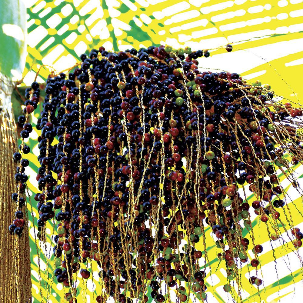villaga-candle-acai-berry-tobac