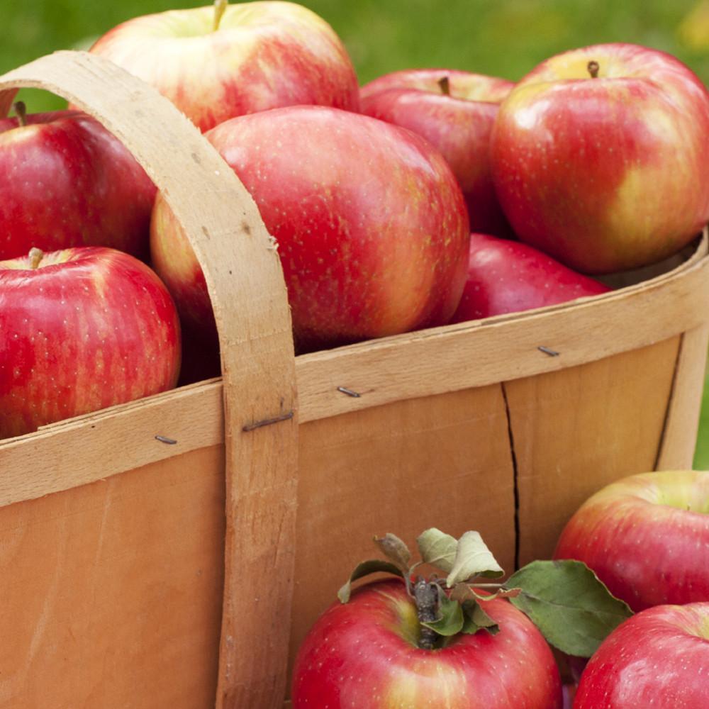 village-candle-crisp-apple
