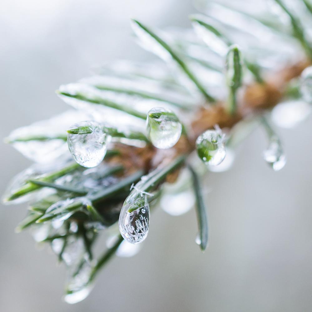 village-candle-frozen-fir