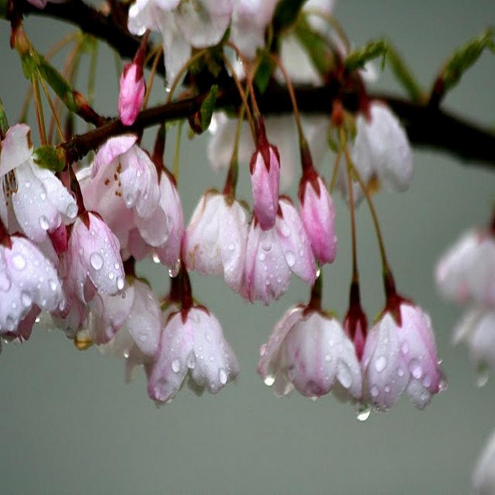 village-candle-rain-blossom