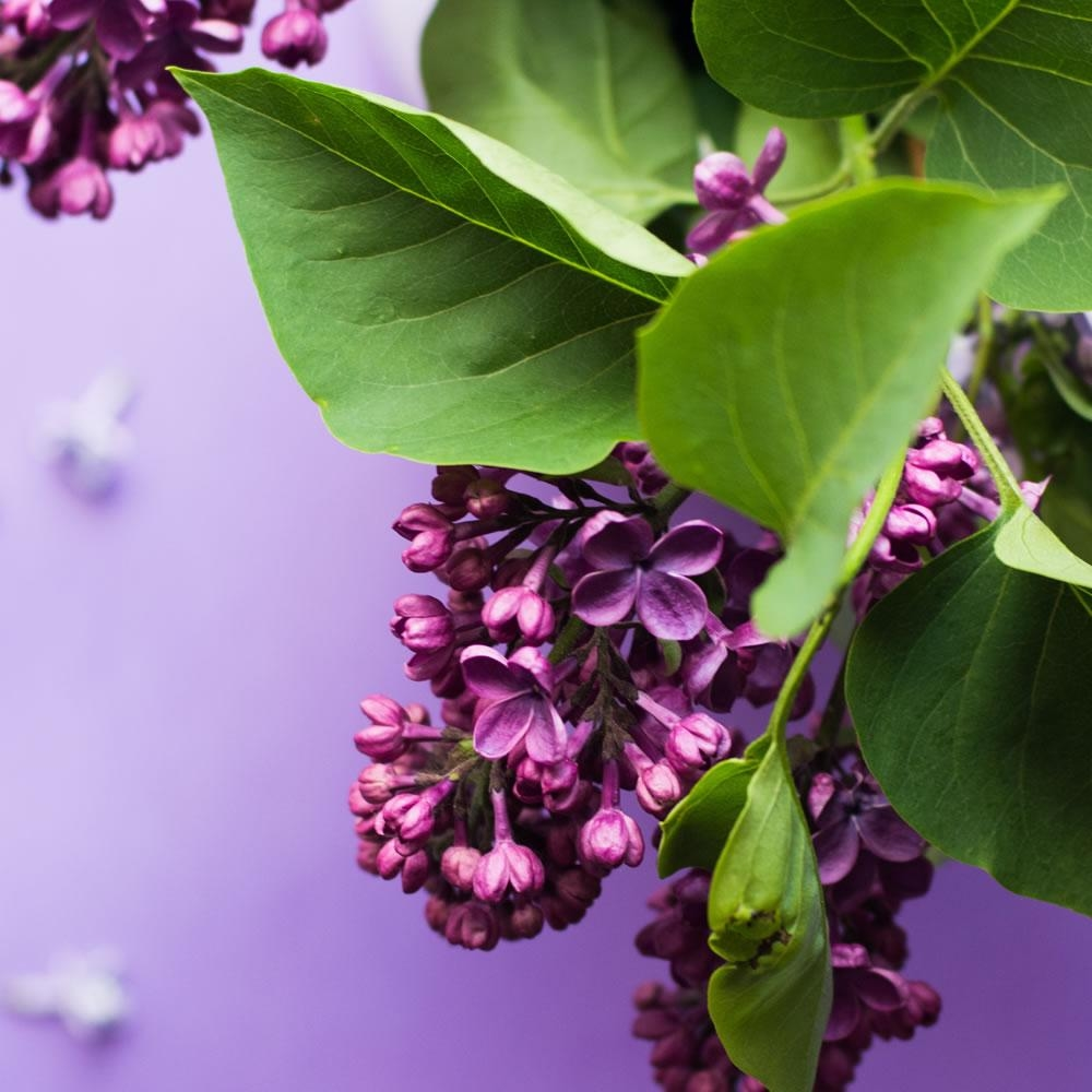 Village Candle Wild Lilac